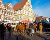 Auftrieb beim Leonberger Pferdemarkt